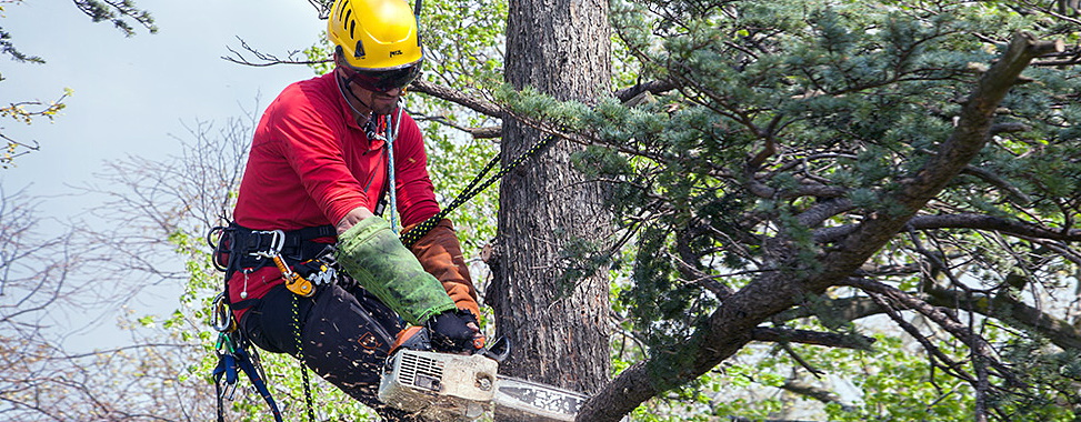 Зрізання та видалення дерев. Запоріжжя.
